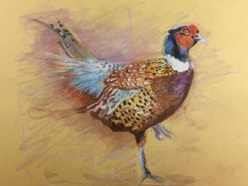 Original Painting of a Pheasant